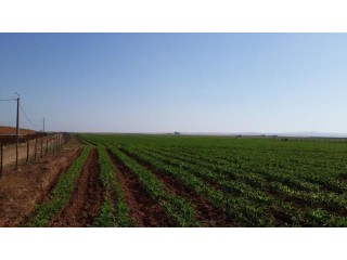 Ferme 27HECTARES A OULAD OMRANE