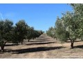 ferme-en-location-10-ha-a-marrakech-small-0